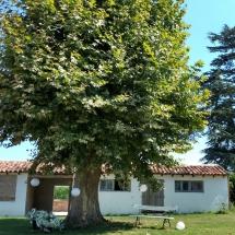 deco-sous-arbre-chateau-lavalade-tarn-et-garonne